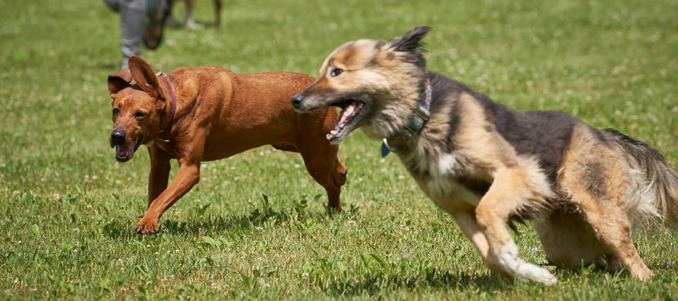 Bullwinkle and Rory running