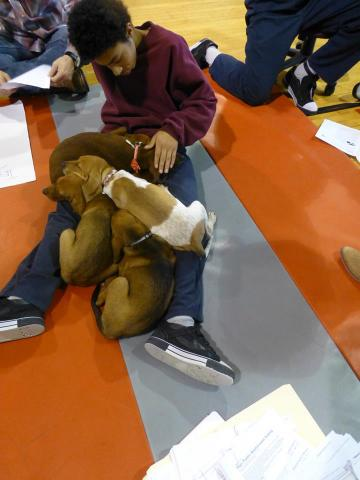 Totem Town inmate with puppy pile